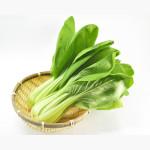 チンゲン菜の下ごしらえ・冷凍保存